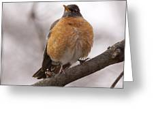 Perched Robin Greeting Card