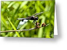 Perched Widow Skimmer Greeting Card