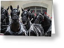 Percheron Horse Team 2008 Greeting Card
