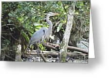 Perching Blue Heron Greeting Card