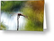 Perching Dragonfly Greeting Card