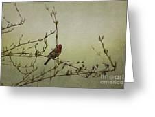 Perching Finch Greeting Card