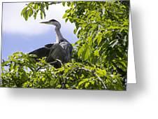 Perching Heron Greeting Card