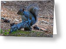Perching Squirrel Greeting Card