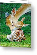 Pere David Deer And Fawn Greeting Card
