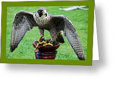 Peregrine Falcon # 1 Greeting Card