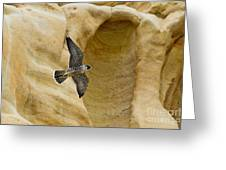 Peregrine Falcon Flying By Cliff Greeting Card