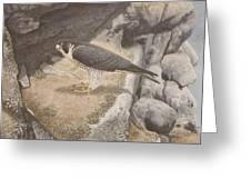 Peregrine Falcon On A Ledge Greeting Card