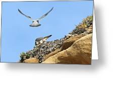 Peregrine Falcons - 2 Greeting Card