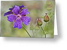 Perennial Geranium Greeting Card