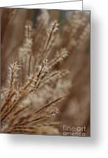 Perennial Grass Greeting Card