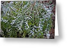 Perennial With Frost Greeting Card