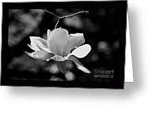 Perfect Bloom Magnolia In White Greeting Card