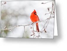 Perfect Cardinal Greeting Card