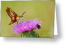Perfect Hummingbird Moth Greeting Card