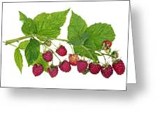 Perfect Isolated Raspberry Greeting Card