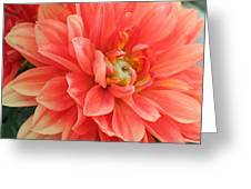Perfect Petals Greeting Card