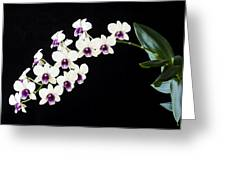 Perfect Phalaenopsis Orchid Poster Greeting Card
