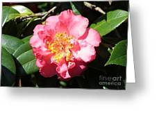Perfect Pink Camellia Greeting Card