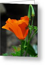 Perfect Poppy Greeting Card