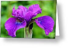 Perfect Purple Specimen Greeting Card