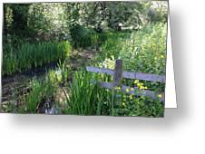 Rushes And Light  Greeting Card