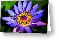 Perfect Water Lily Greeting Card