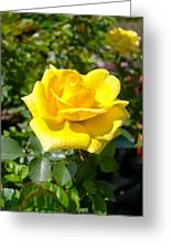 Perfect Yellow Rose Greeting Card