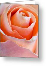 Perfection In A Peach Rose Greeting Card
