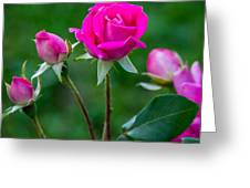 Perfectly Pink 2 Greeting Card