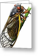 Periodical Cicada Greeting Card