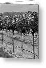 Perissos Winery Greeting Card