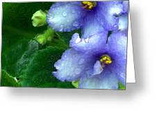 Periwinkle African Violets Greeting Card