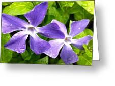 Periwinkle Blue Dew Greeting Card