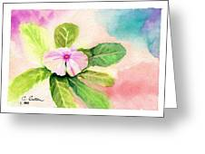 Periwinkle Greeting Card