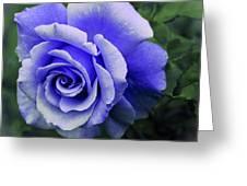 Periwinkle Rose Greeting Card