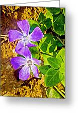 Periwinkles By West Point Inn On Mount Tamalpias-california  Greeting Card