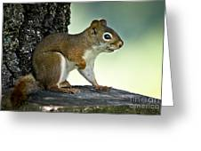 Perky Squirrel Greeting Card