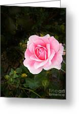 Personally Pink Greeting Card