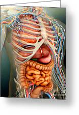Perspective View Of Human Body, Whole Greeting Card