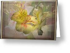 Peruvian Lily Framed Greeting Card
