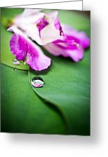 Peruvian Lily Raindrop Greeting Card