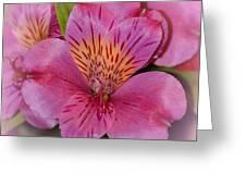 Peruvian Pink Greeting Card