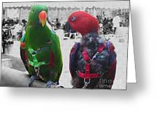 Pet Parrots In A Cafe Greeting Card