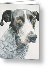 Pet Portrait Dog Art Print Hire Commission Pet Portrait Artist Greeting Card