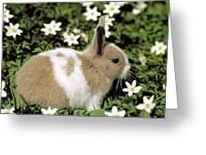 Pet Rabbit Greeting Card by Hans Reinhard/Okapia