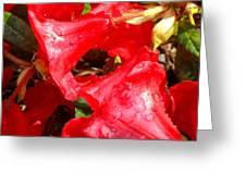 Petal Fresh Greeting Card