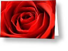 Petal Of Honor Greeting Card