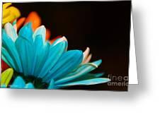 Petal Paloza Greeting Card