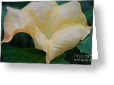 Petal Pillows By Jrr Greeting Card